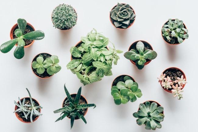 7 φυτά που θα ανανεώσουν την κουζίνα σου